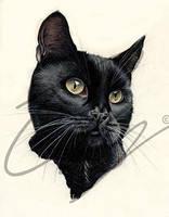 Cat by sormerod