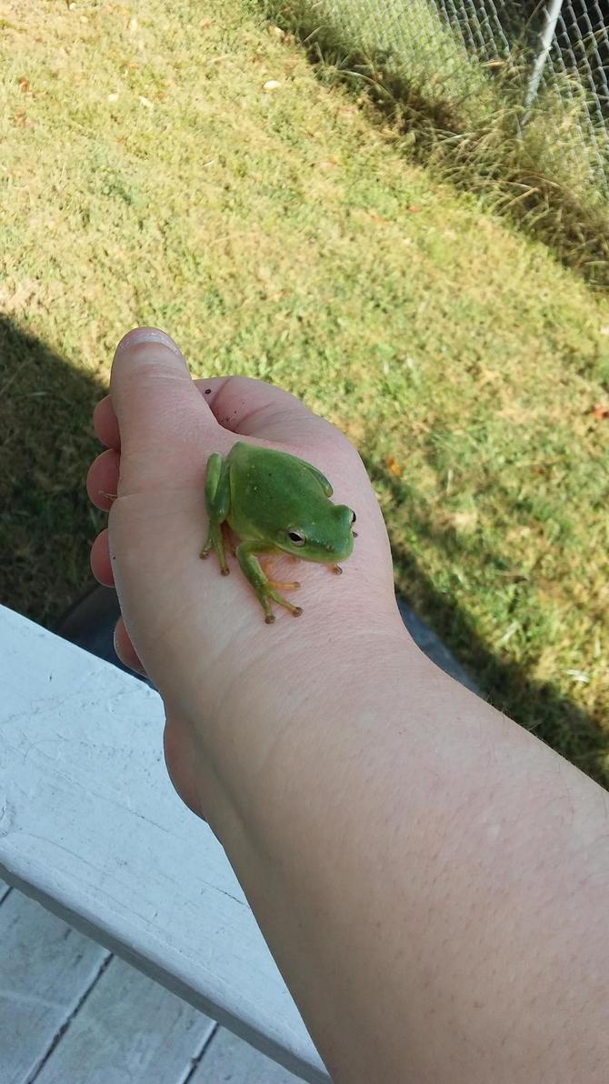Tree Frog by brandi3981