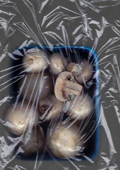 Mushroom #14