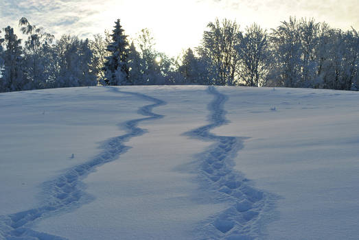 two paths, one winter
