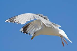 Birds 003 by akio-stock