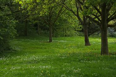 Meadow_2014-05_0001 by akio-stock