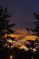Sunset-tree 0035 by akio-stock