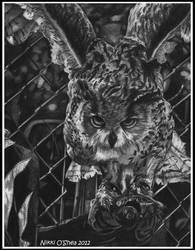 Let me Fly Away - Owl Portrait