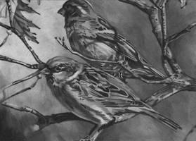 Sparrows Sketch Prize by DragonPress