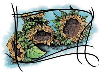 DCBB - Sunflowers by DragonPress