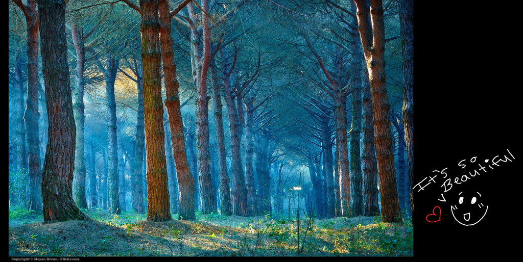 the dream forest by veeeester400