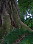 lugubrum-stock trees1