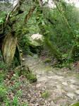 Lugubrum-stock nature7
