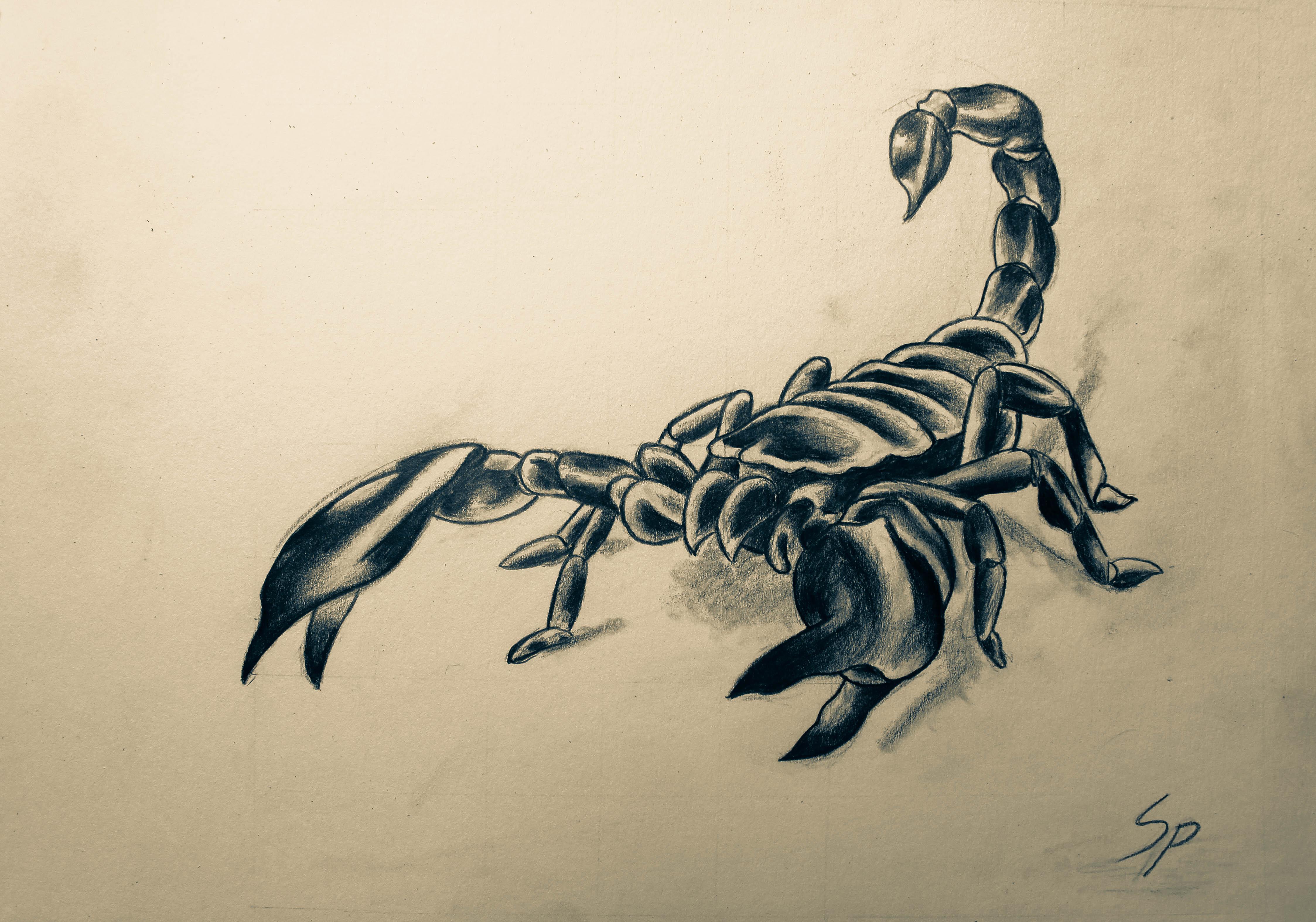 Traditional Scorpion Tattoo Designs