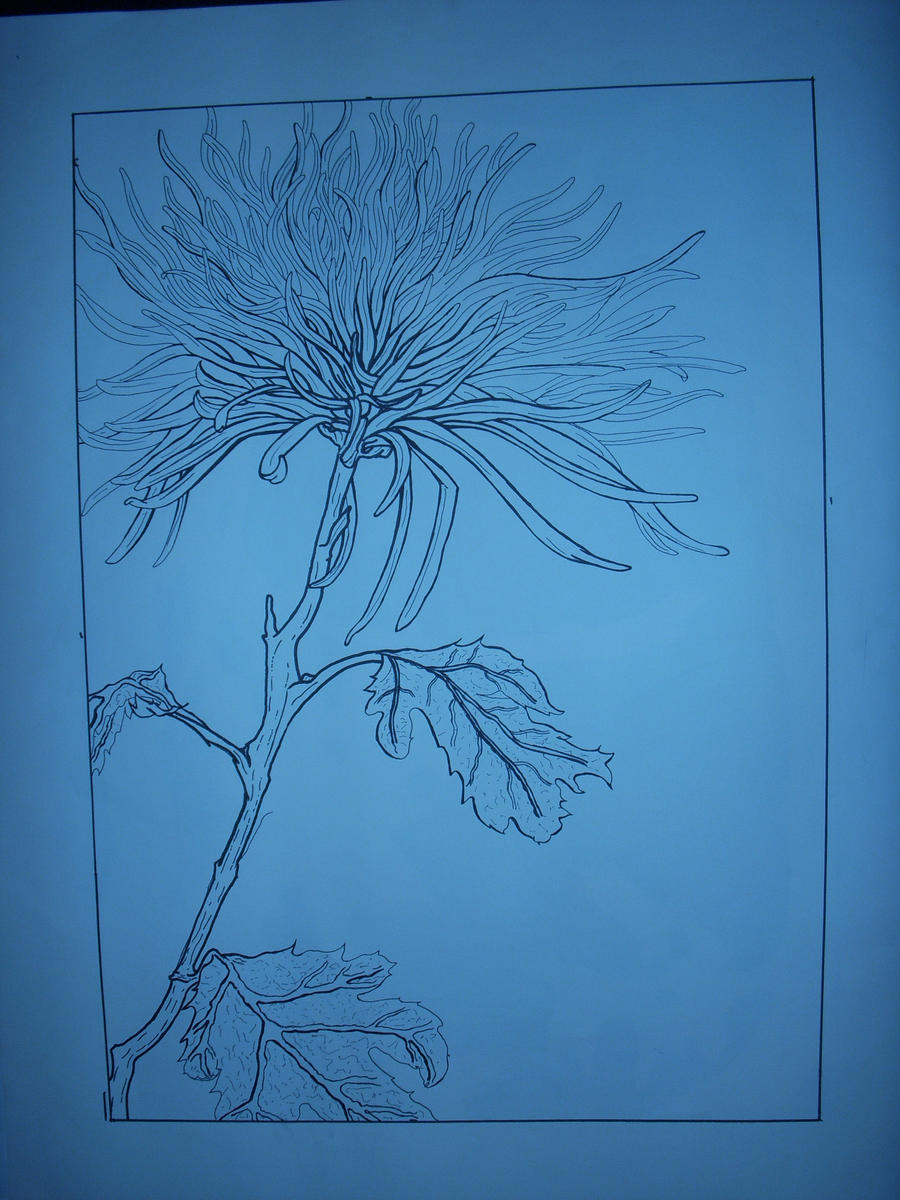Contour Line Drawing Software : Fuji mum contour line drawing by drider on deviantart
