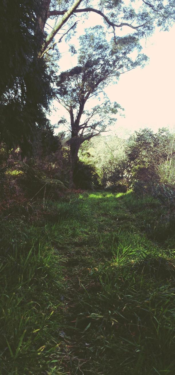 A Road To Walk Upon by xMidoriKawaiix