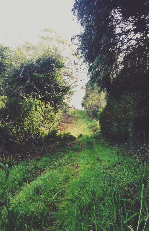 A Road To Walk Upon - 2 by xMidoriKawaiix