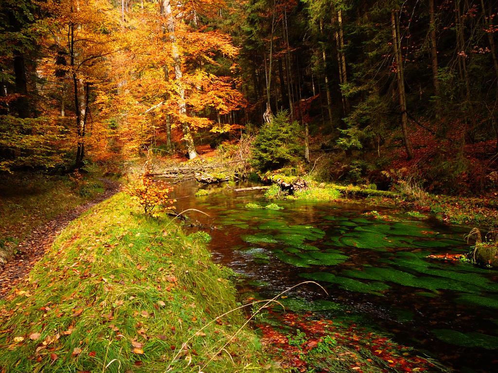 Dreaming River by SleepyMood
