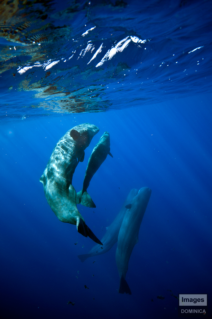 Sperm whales by Nudibranch182