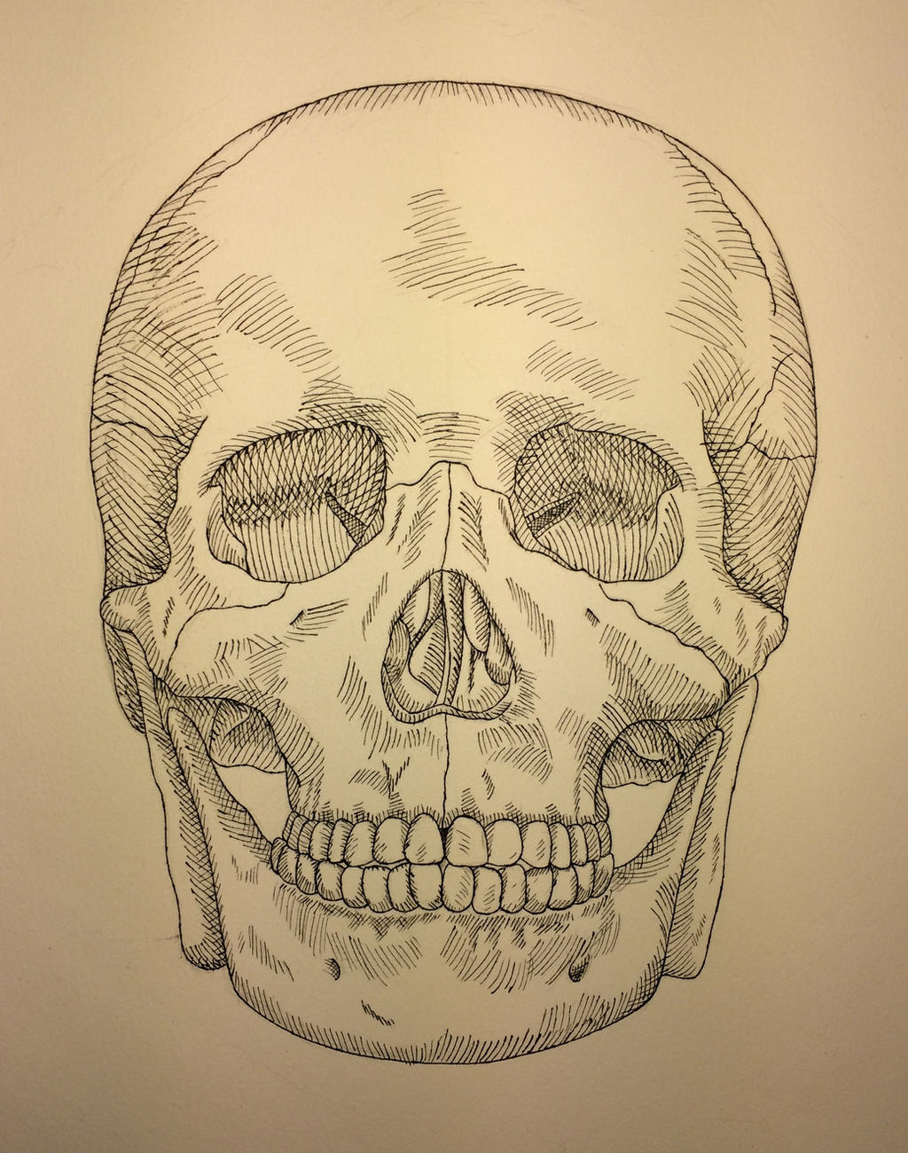 Skull Pen and Ink