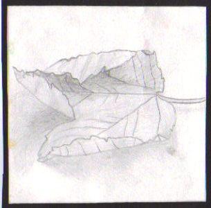 leaf study drawing by 13RiCHiE13
