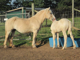 American Cream Draft and Foal by xXxImpulsivexXx