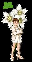 DW Flowers: Small Tegan