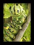 Swallowtail's caterpillar