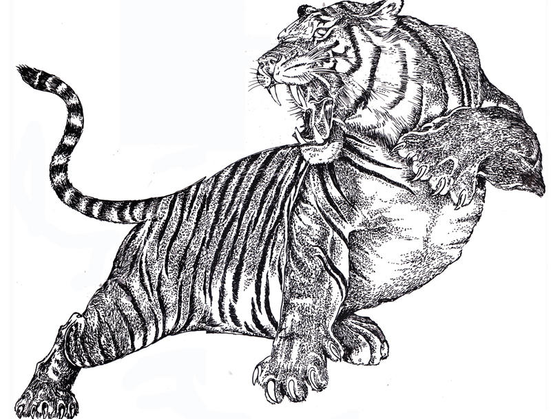 Free Big Cat Drawings Sketches