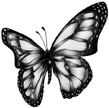Butterfly PNG 1 by ValeryPedidos