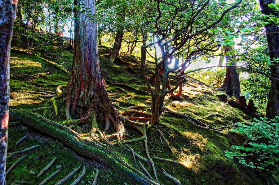 Japanese Forest by EpisOd