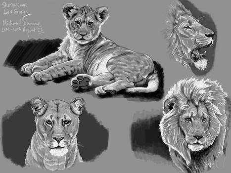 Lions Pen and Ink Sketches