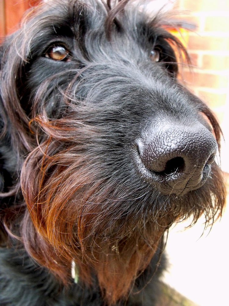 Zoe ginger beard by Lishu