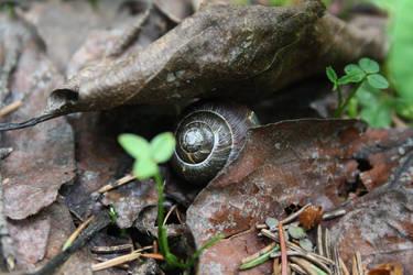 Hiding Snail by victizzle-mofo