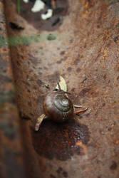 Suspicious Snail by victizzle-mofo