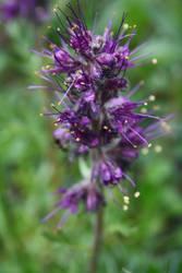 Crazy Purple Flower by victizzle-mofo