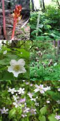 Photo Dump: Forest Flowers by LorienInksong
