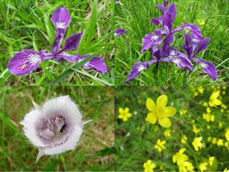 Photo Dump: Field Flowers by LorienInksong