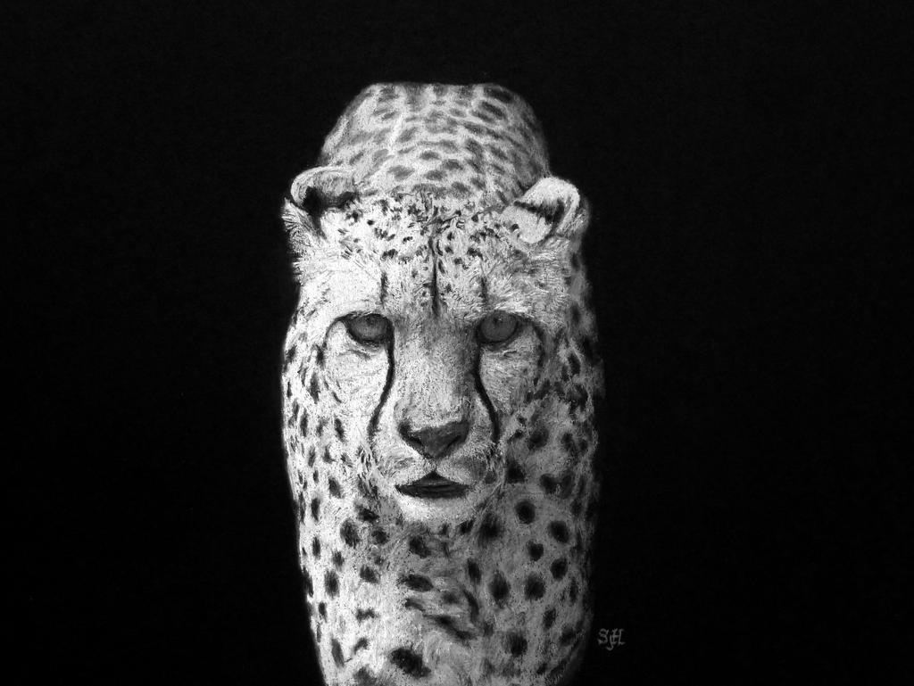 Cheetah in pastel by SteveHargreaves