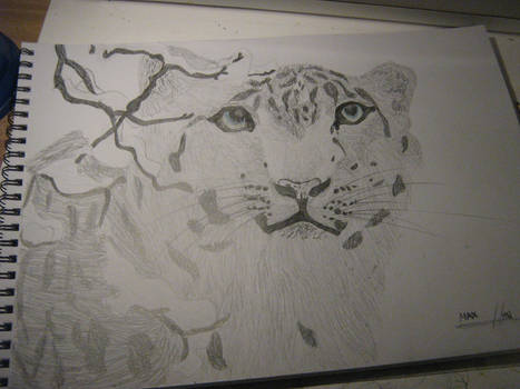 another snow leopard XD