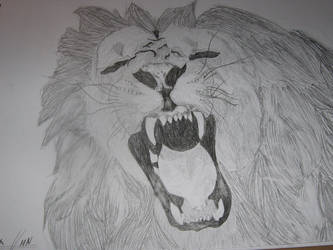 mad lion is mad