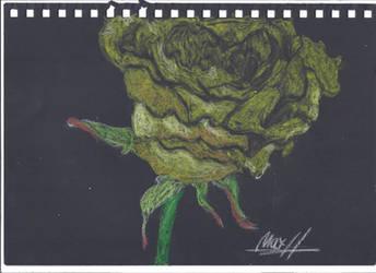 yellow rose oil pastel