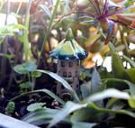 House of tiny fairies -- outdoor