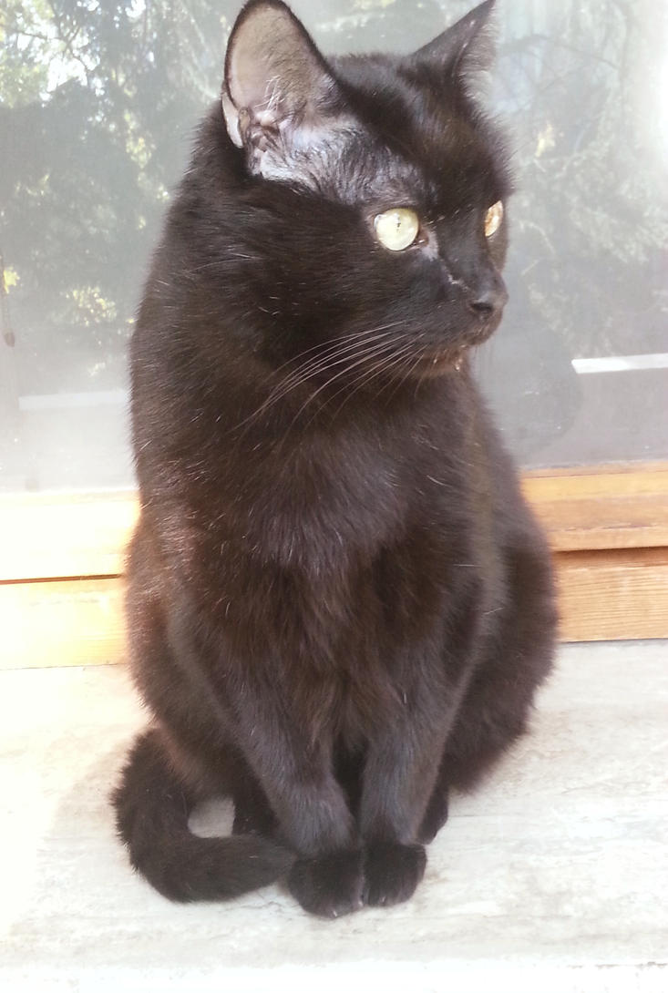 Black Cat Day by maya49m