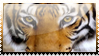 Tiger Stamp by MajinPat
