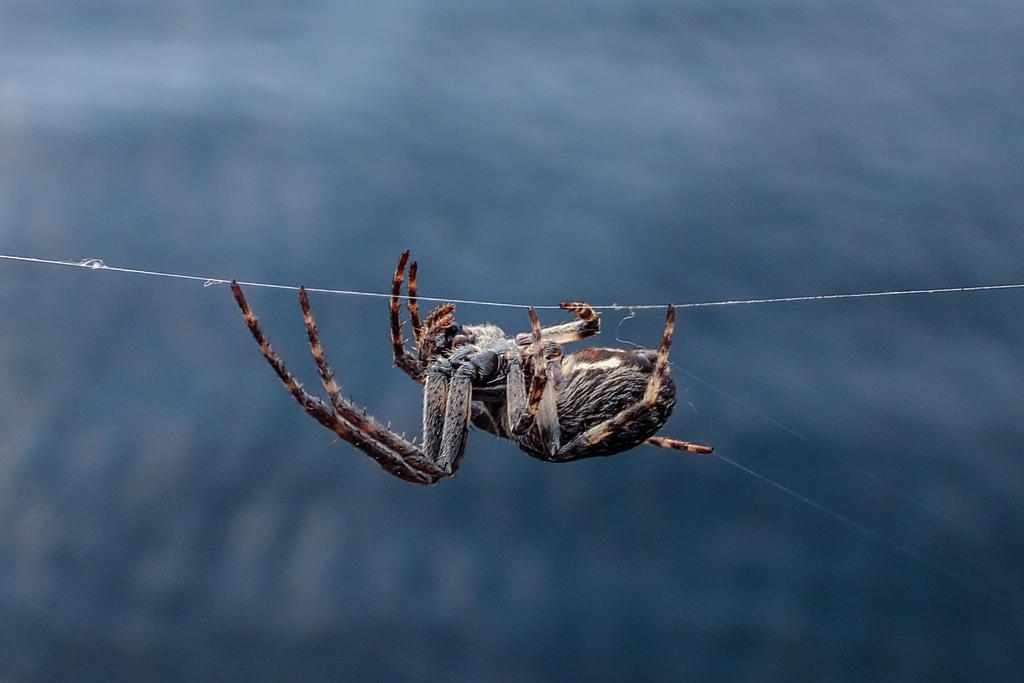 spider by 01-11-89