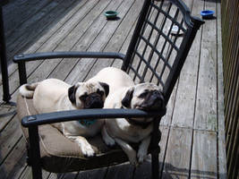 Nap Time Sleepy Pugs by exoticacandi