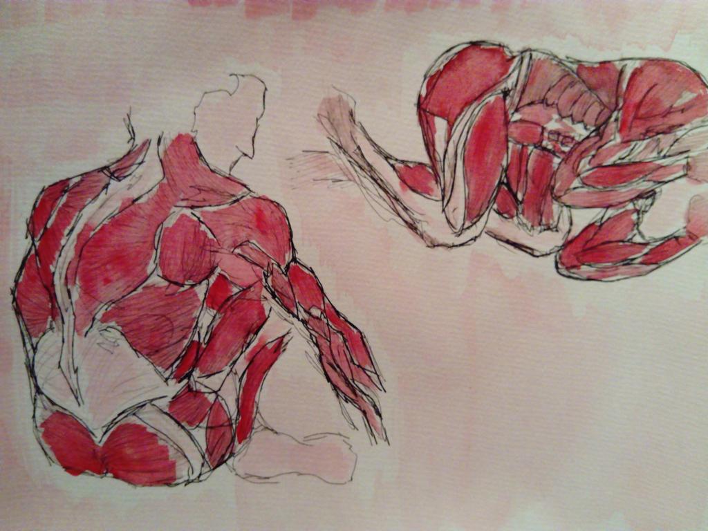 Anatomy  by JosephFletcher
