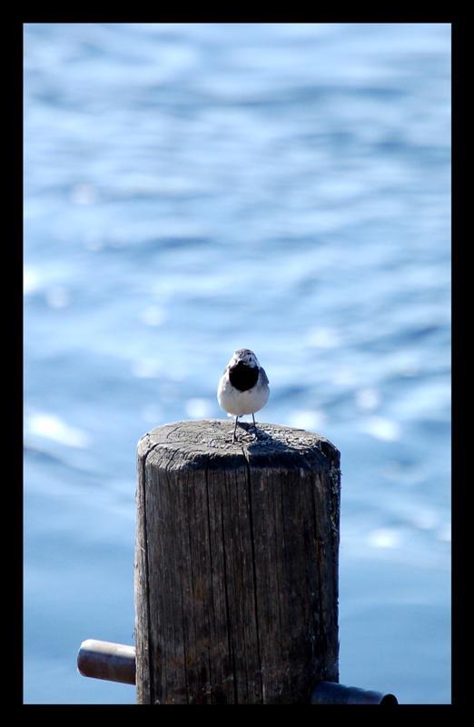 Birdie pose by DeviantPunisher