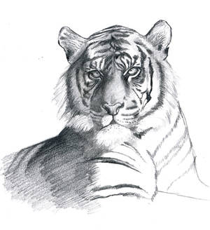 Tigre3 working3 Hcontrast