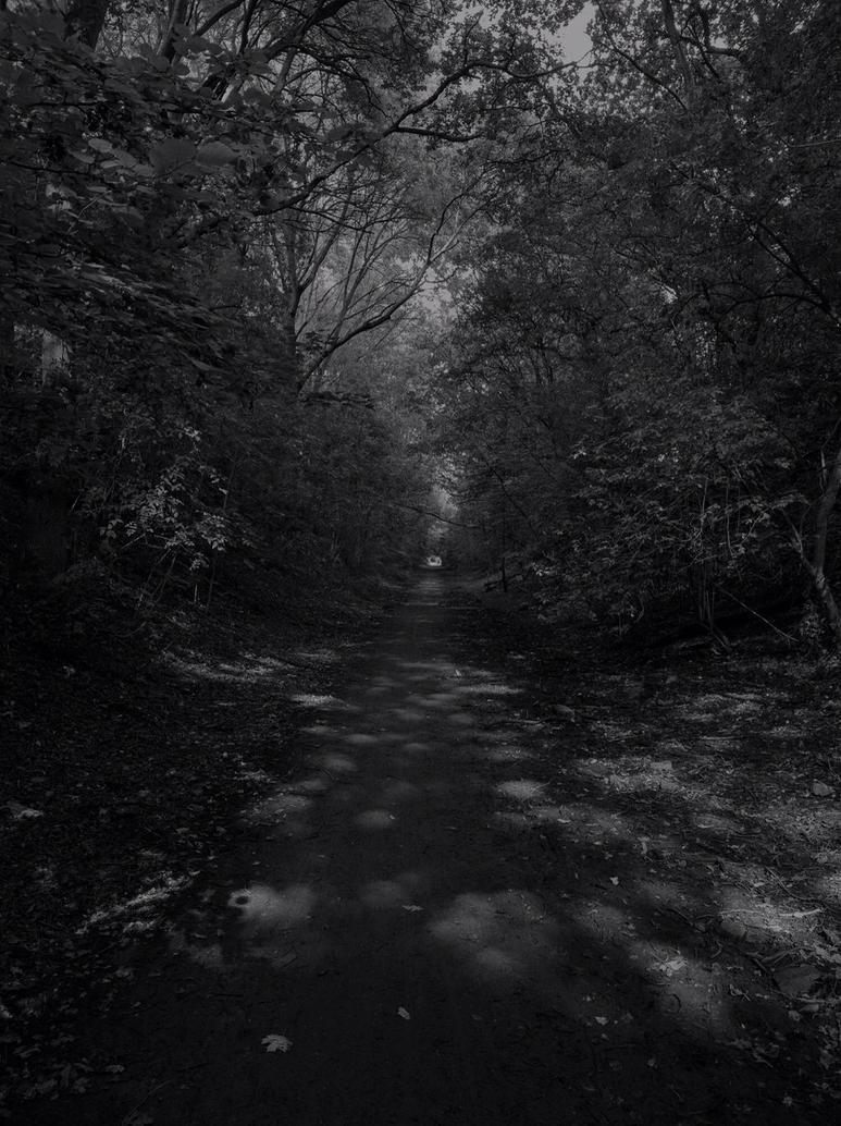 wood path by chrisbaggott
