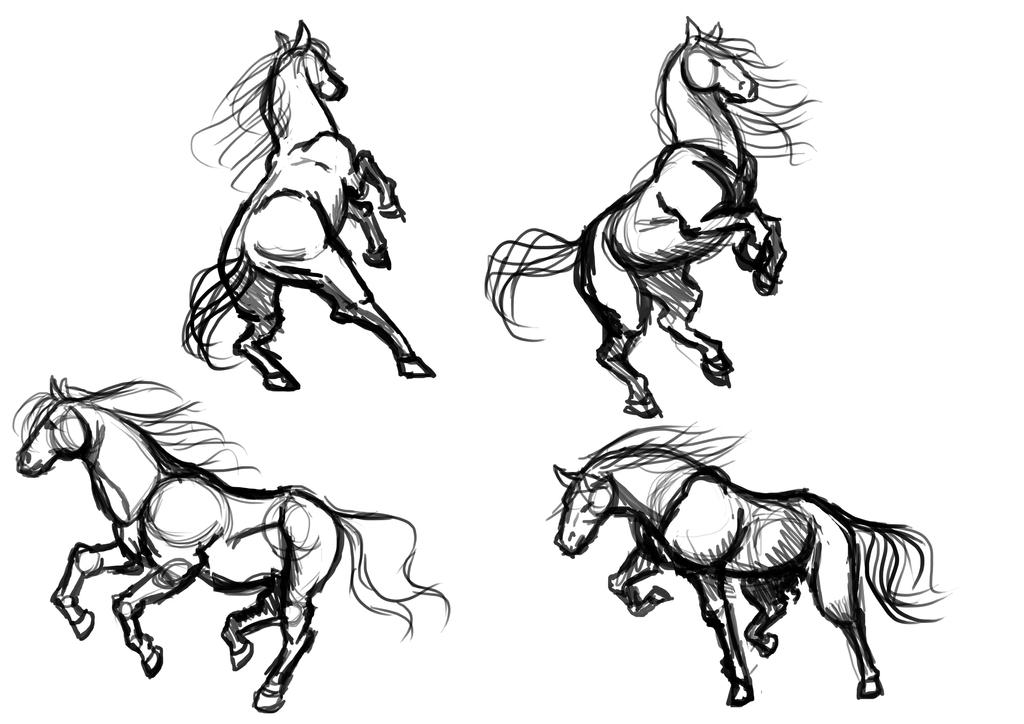 Horse study by PinkShooter-chan