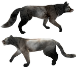 Free Presets, canine and feline version.