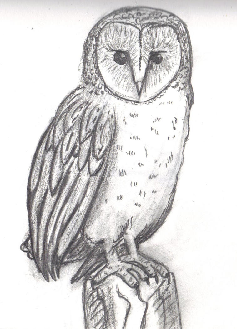 Barn Owl Sketch By Topendi On Deviantart
